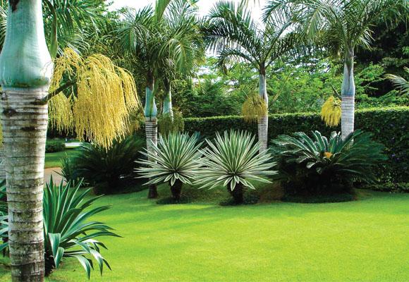 áreia externa, jardim, limpeza, clean work
